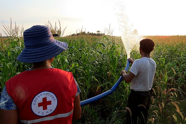 North Korea declares emergency over heatwave threat to people and crops