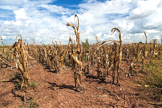 Climate Centre joins White House 'round table' on agriculture and food resilience