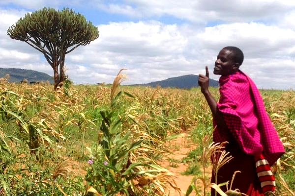 'The rains are different now': Demonstrating climate services for farmers in Tanzania