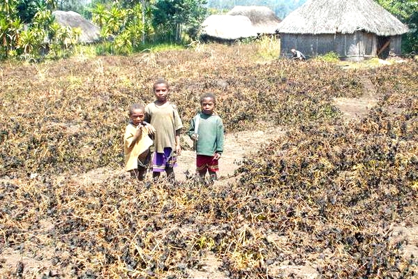IFRC monitors worsening El Niño-related drought  in Papua New Guinea