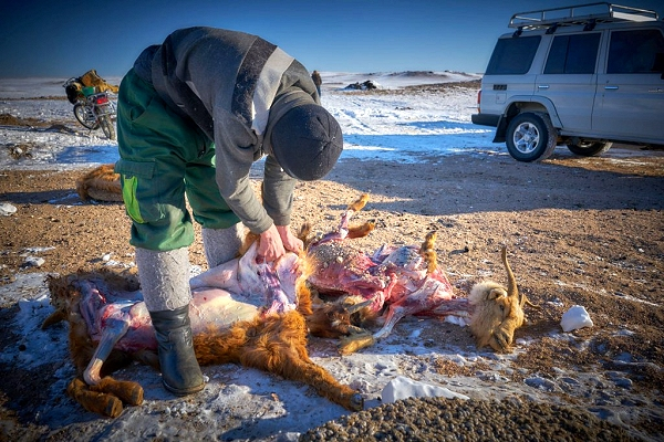 Mongolian dzud disaster echoes 2011 SREX report on extremes, prompting new climate uncertainty