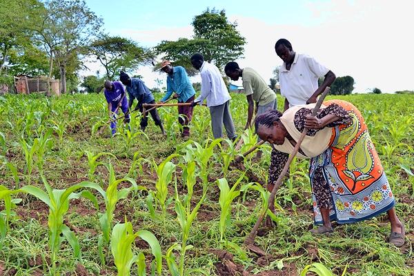 Seeds of change: making the most of El Niño in Kenya