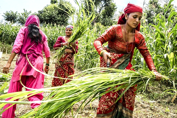 FAO launches new web platform  for climate-smart agriculture