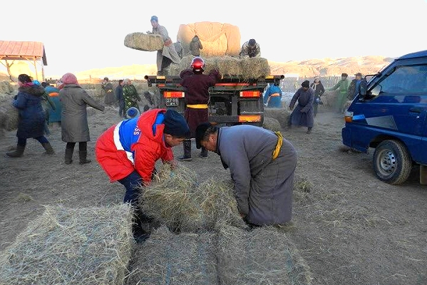 New IFRC assistance for herders struggling with extreme winter conditions in Mongolia